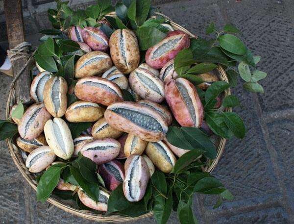 八月瓜多少钱一斤?八月瓜种植前景