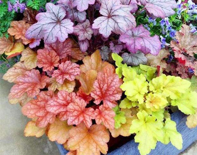 冬天庭院适合种的几种植物,好看又好养(图文)