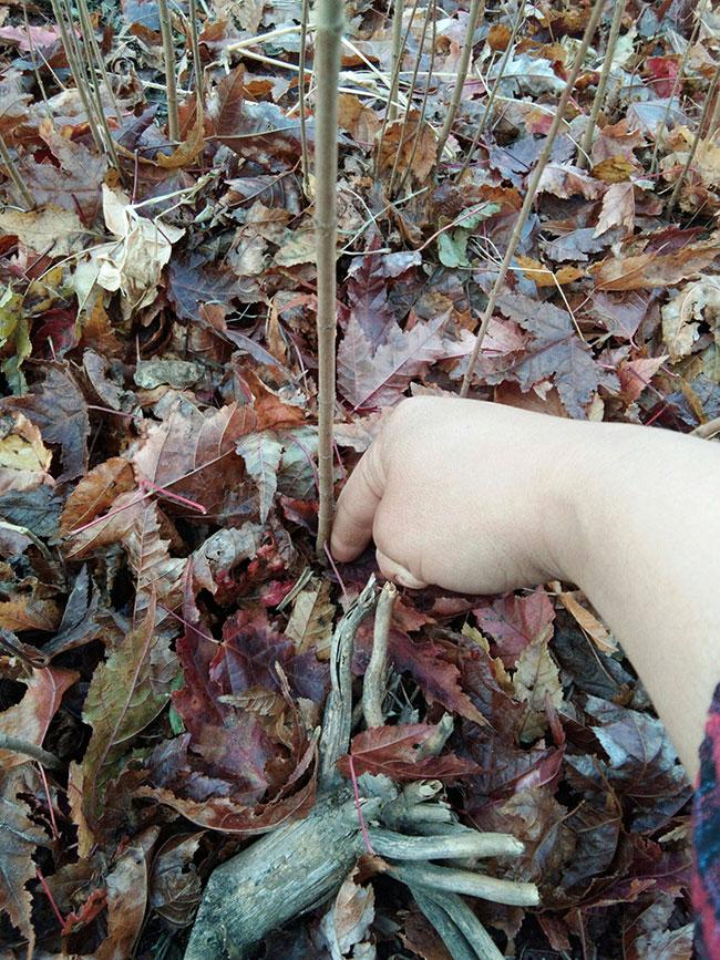 三角槭特征有哪些?三角槭特征及园林用途