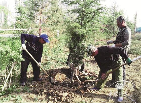 怎样提高补植苗木的成活率