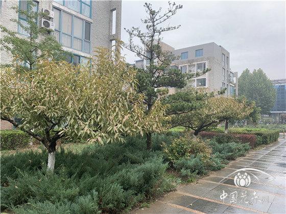 哪些因素制约了小城市园林绿化发展