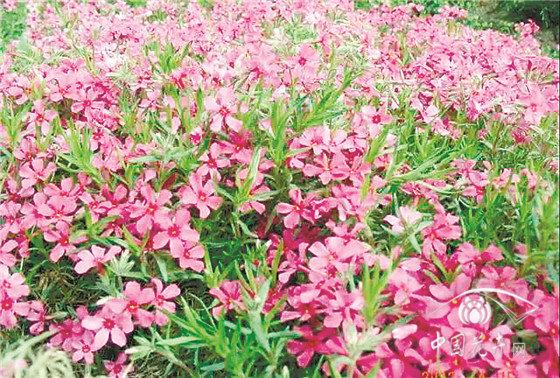 种上这些耐寒植物冬季的庭院花园一样可以很美