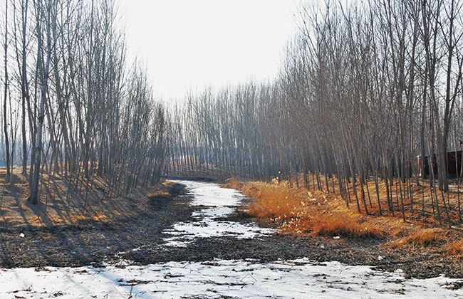 河南省2020年冬季义务植树活动举行