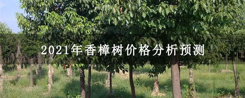 2021年香樟树价格分析预测