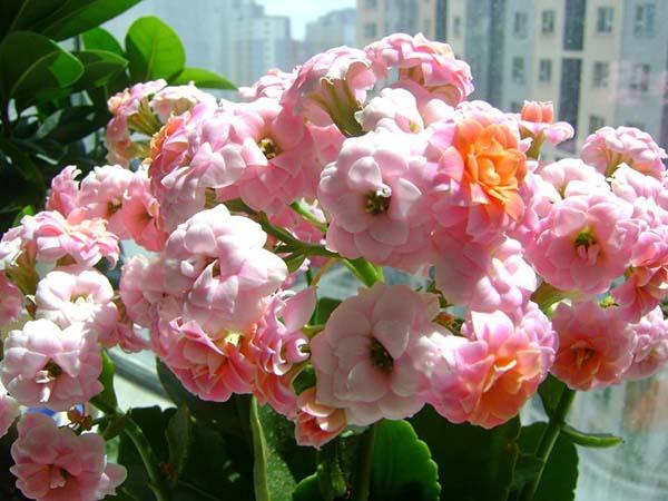 """近期花市的热销品种,喜逢""""双节""""家家户户都在抢!"""