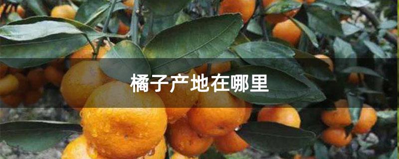 橘子产地在哪里