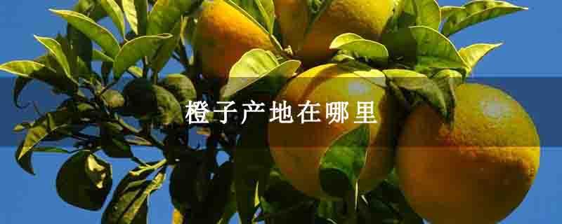 橙子产地在哪里