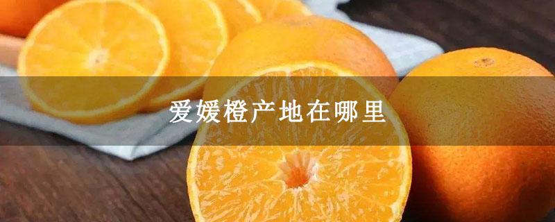 爱媛橙产地在哪里