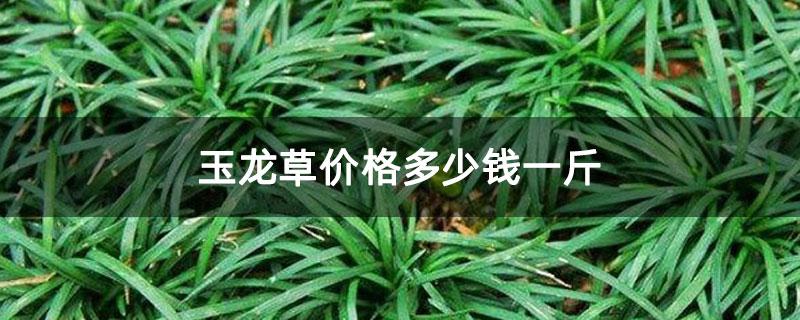 玉龙草价格多少钱一斤