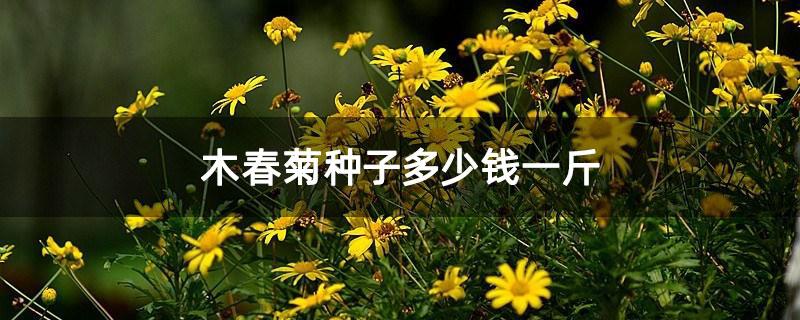 木春菊种子多少钱一斤