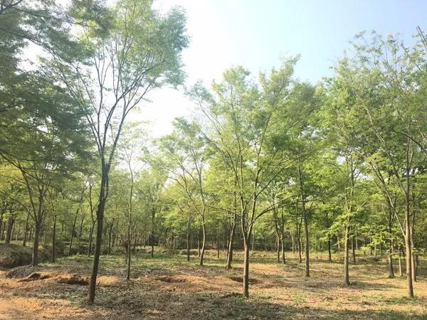 21年专注品质与创新,做苗木行业排头兵——访句容市茅山镇龙喜苗圃场