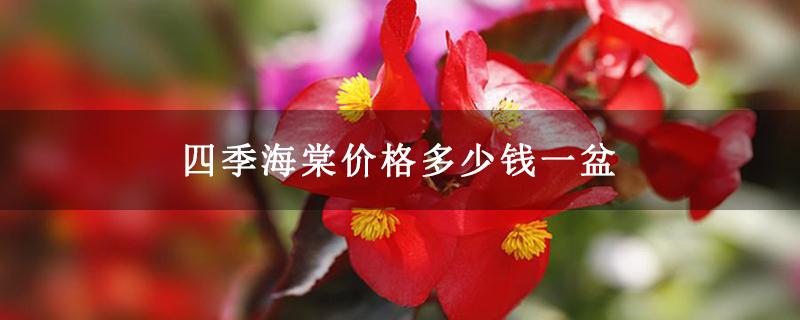 四季海棠价格多少钱一盆