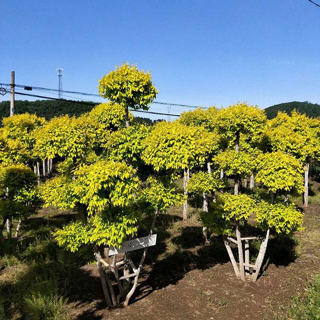 沙河镇:春风催新绿 植树造林忙