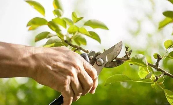 4月份苗圃管理重点工作