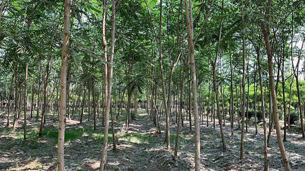 2021年全国苗木行情预测