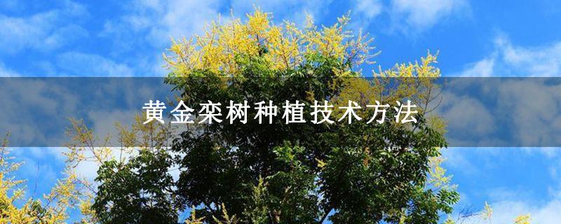 黄金栾树种植技术方法