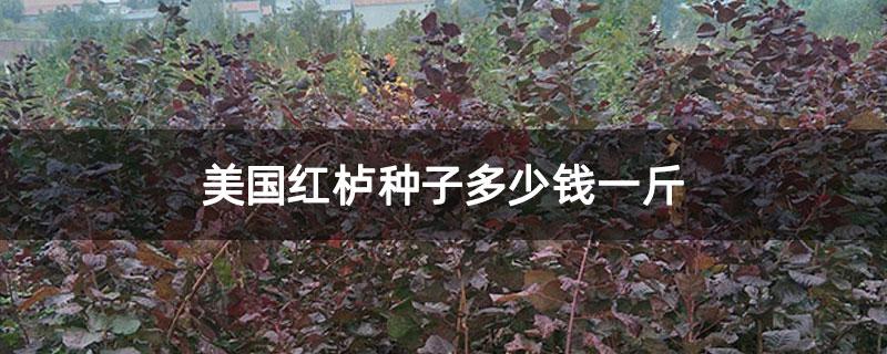 美国红栌种子多少钱一斤