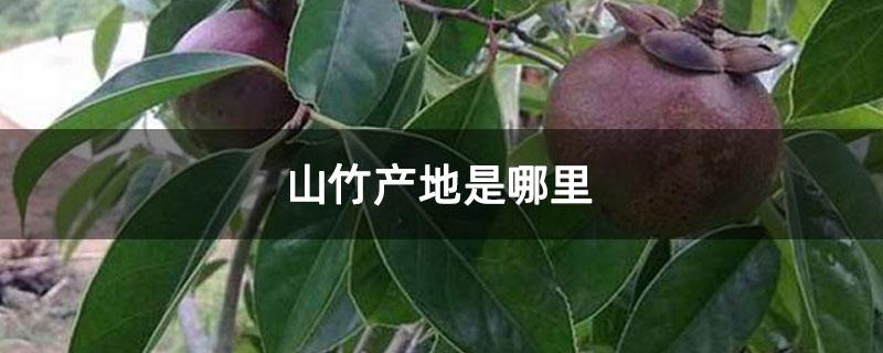 山竹产地是哪里