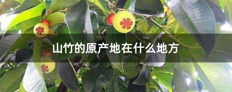 山竹的原产地在什么地方