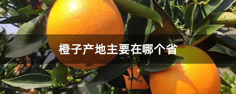 橙子产地主要在哪个省