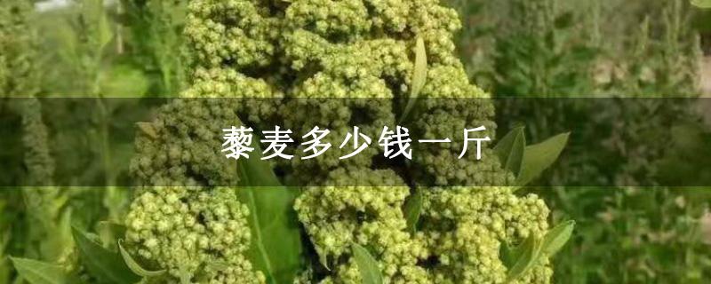 藜麦多少钱一斤