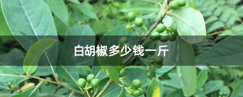 白胡椒多少钱一斤