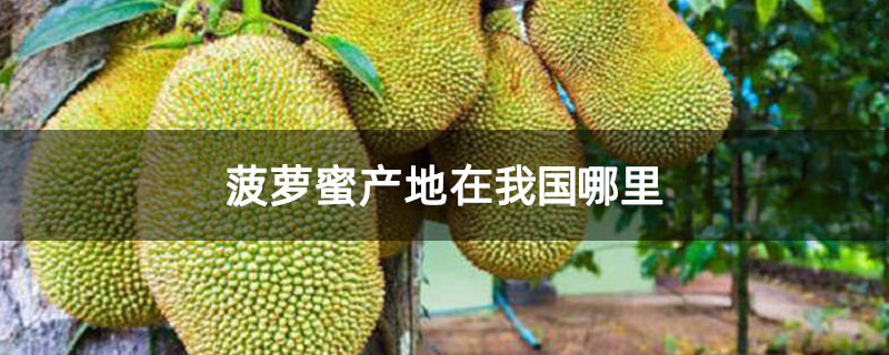 菠萝蜜产地在我国哪里