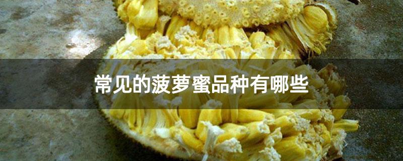 常见的菠萝蜜品种有哪些