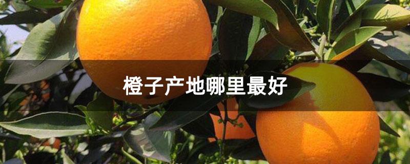 橙子产地哪里最好