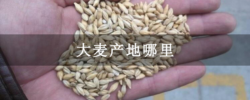 大麦产地哪里