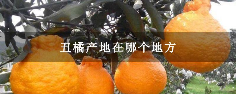 丑橘产地在哪个地方