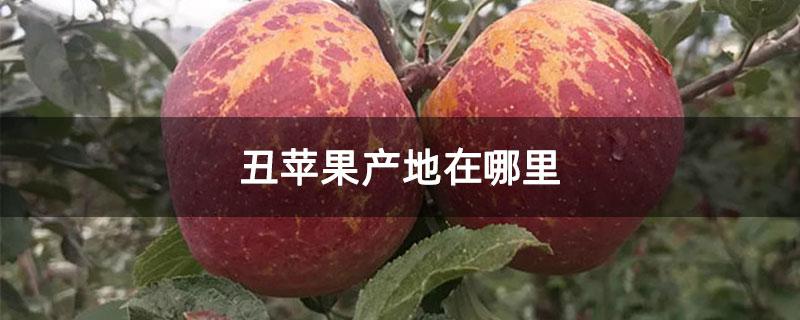 丑苹果产地在哪里