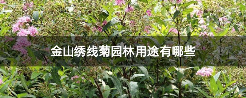 金山绣线菊园林用途有哪些