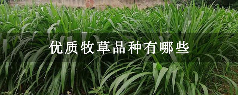 优质牧草品种有哪些