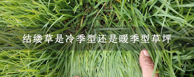 结缕草是冷季型还是暖季型草坪