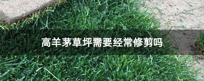 高羊茅草坪需要经常修剪吗