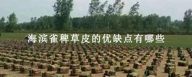 海滨雀稗草皮的优缺点有哪些