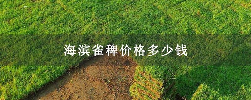 海滨雀稗价格多少钱