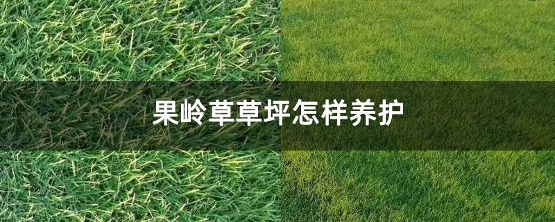 果岭草草坪怎样养护