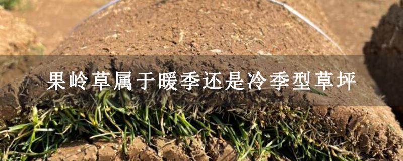 果岭草属于暖季还是冷季型草坪