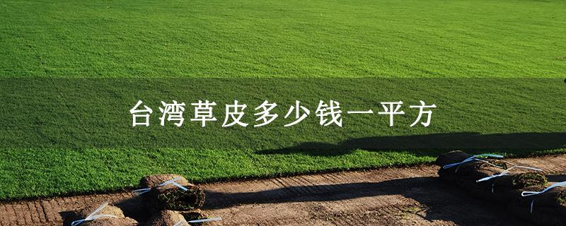 台湾草皮多少钱一平方