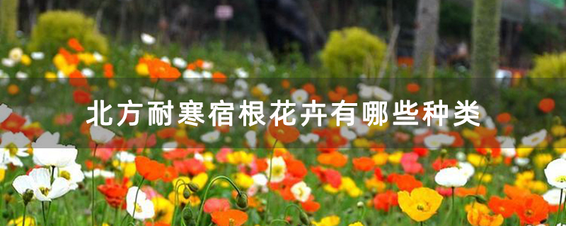 北方耐寒宿根花卉有哪些种类