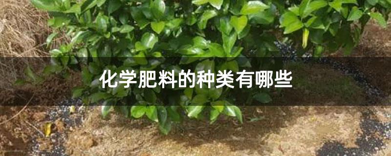 化学肥料的种类有哪些