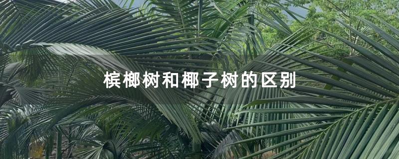 槟榔树和椰子树的区别
