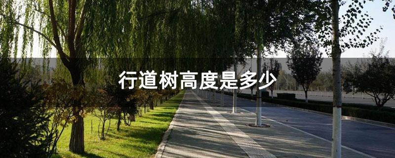 行道树分枝点高度是多少