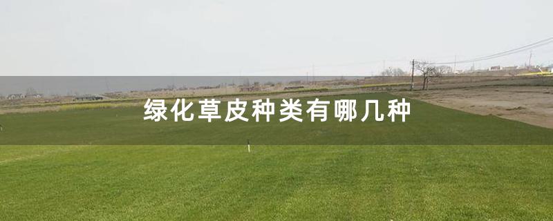 绿化草皮种类有哪几种