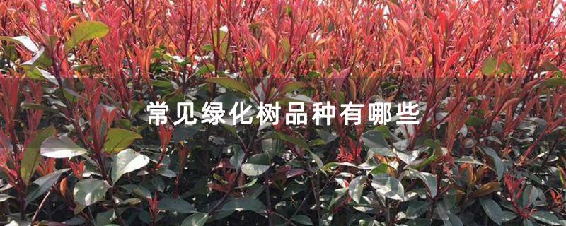 常见绿化树品种有哪些