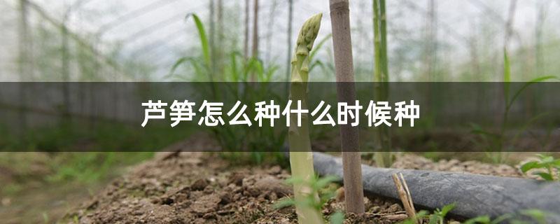芦笋怎么种什么时候种