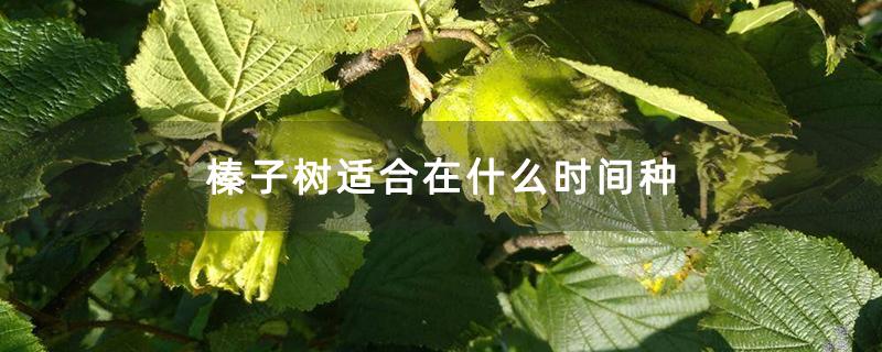 榛子树适合在什么时间种