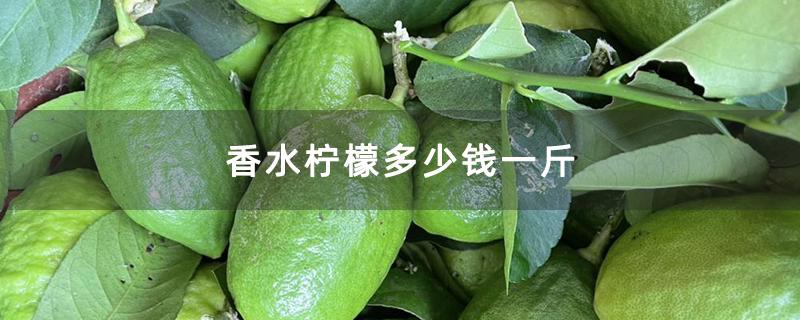 香水柠檬多少钱一斤